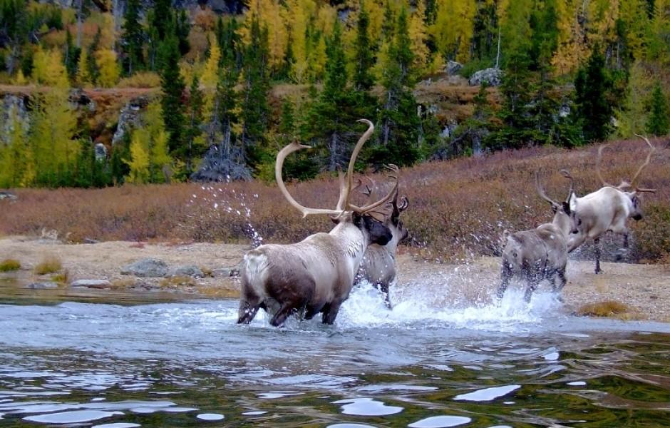 Охота в Канаде