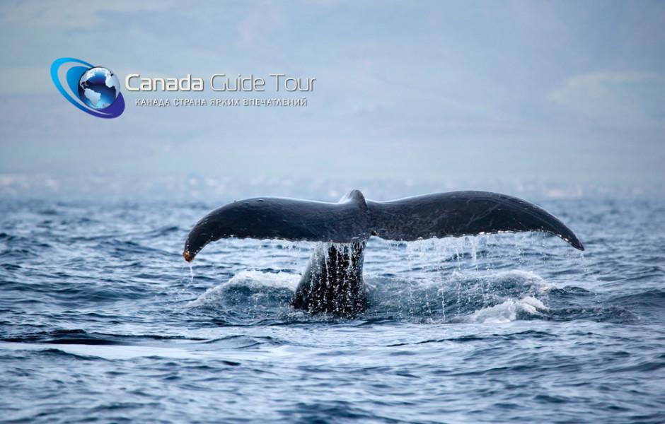 Туры и экскурсия на китов