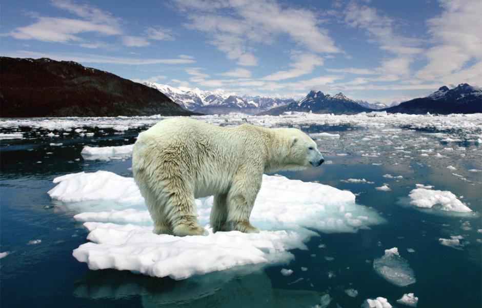 Тур на Белого Медведя