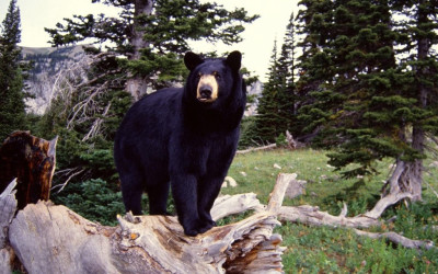 Охотничьи туры в Канаде