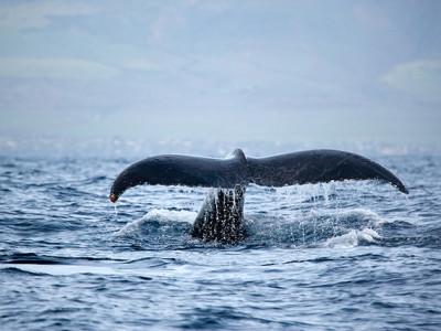 Тур на смотр китов
